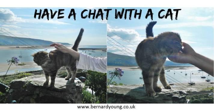 Chatwithcat